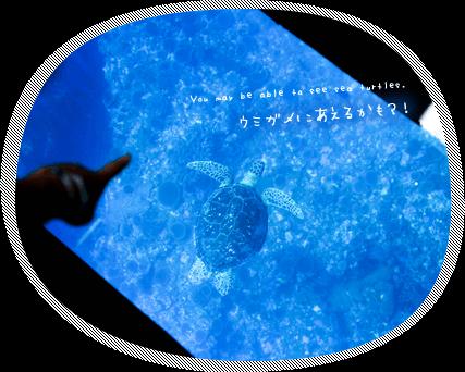 グラスボートでウミガメに会おう
