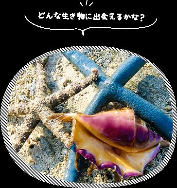 石垣島の無人島へ行けるツアー