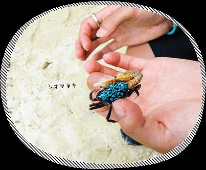 石垣島のサンゴやお魚ウミガメが見れる