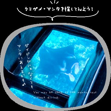 石垣島でマンタに会おう