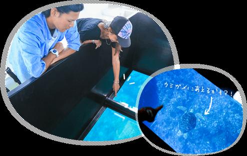石垣島のマンタが見れる!