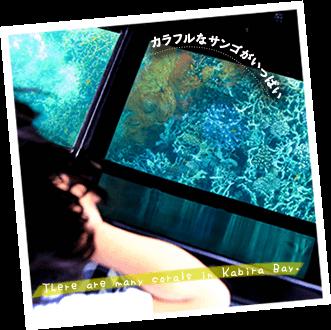 石垣島グラスボートでサンゴを見よう